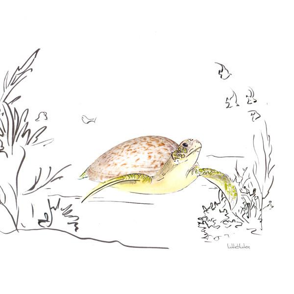 Meermandel-Schildkröte