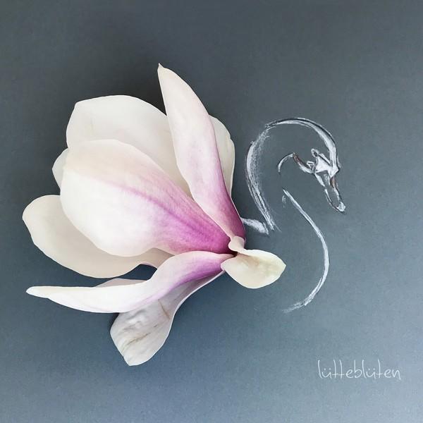 Magnolia Swan