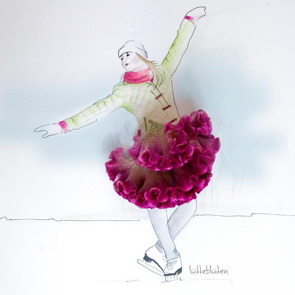 Celosia Argen Pink