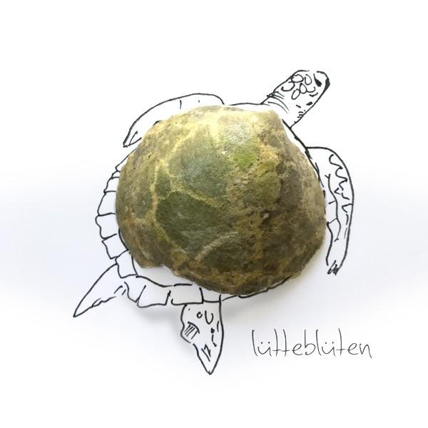 Muschel-Schildkröte