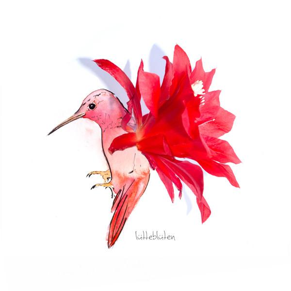 Kaktus Kolibri